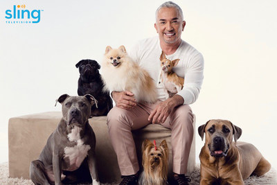Dog behaviorist Cesar Millan partners with Sling TV for National Dog Day to curate top shows dogs will love, based on extensive knowledge in dog psychology.