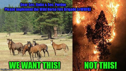 Wild Horse Fire Brigade is a novel plan to re-wild native species (grazers) into and around carefully selected wilderness and forest areas to abate wildfire fuels of grass and brush, saving Americans $-billions of dollars annually.