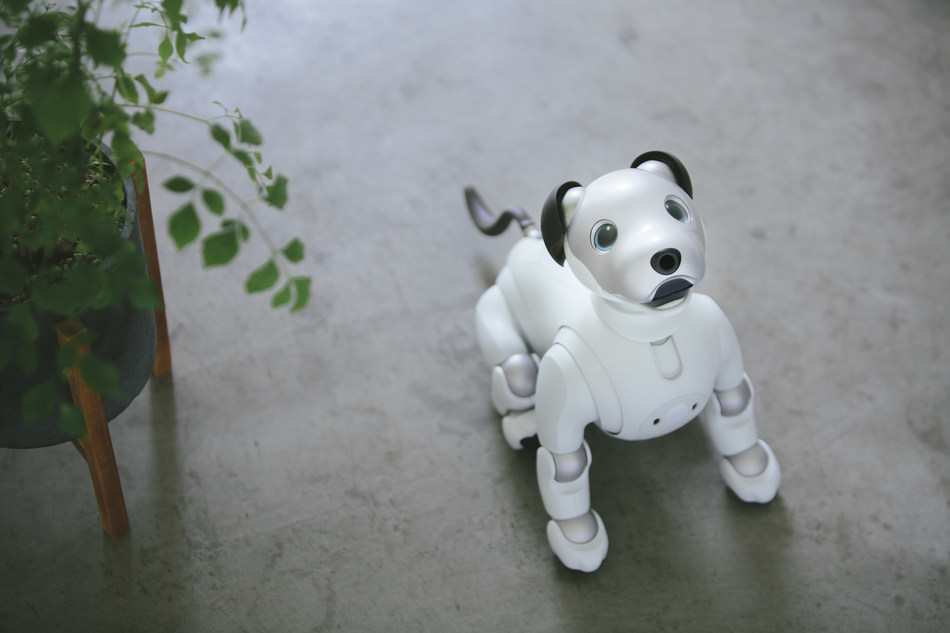 Sony Announces Limited First Litter Edition Release of aibo