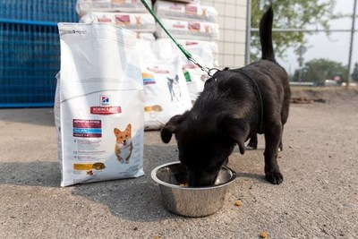 Happiness starts with a wet nose and ends with a wagging tail for pups across BC, who can fill their bellies thanks to a 3,000 pound donation of pet food from Hill's Pet Nutrition Canada to the BC SPCA's emergency evacuation shelter in Prince George, BC. The donation comes at a time where owners and pets from surrounding communities have been displaced from their homes due to ongoing wildfires that continue to rage across British Colombia. Photo credit: Canadian Press. (CNW Group/Hill's Pet Nutrition Canada)