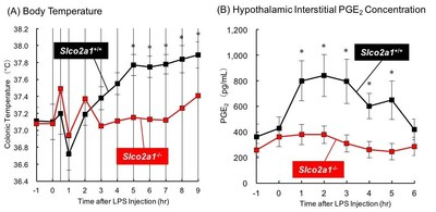 Figure 1 Changes in body core temperature (A) and hypothalamic interstitial PGE2 concentration (B) in mice injected with lipopolysaccharide (LPS). LPS was intraperitoneally injected to Slco2a1+/+ or Slco2a1-/- mice at time 0 hr. Body temperature was measured by monitoring colonic temperature. For PGE2 measurements, samples were collected by means of microdialysis, and subjected to LC-MS/MS analysis. (A) and (B) show mean values ± S.E.M of 10 and  6 mice in each group, respectively. (PRNewsfoto/Kanazawa University)