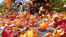 Get Car Insurance Quotes This Fall