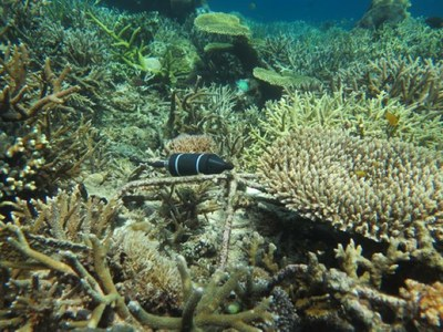 Bali Coral Reef Restoration - Mars, Inc. Project