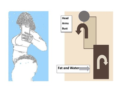 Graphic of Fat and Water Distribution