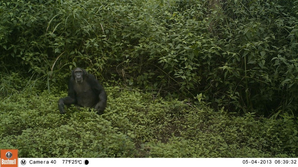 Bucknell University biology researchers and conservationists from Fauna & Flora International have teamed up with government and conservation authorities to capture more than 425,000 images through a camera wildlife survey in South Sudan. The images, like the one shown here, can be viewed on Zooniverse.org by volunteers to identify and verify animal species.