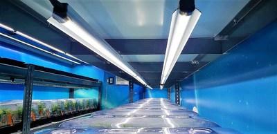 Vue de l'intérieur : Véhicule transporteur de clone développé par BC Northern Lights (Groupe CNW/Aurora Cannabis Inc.)