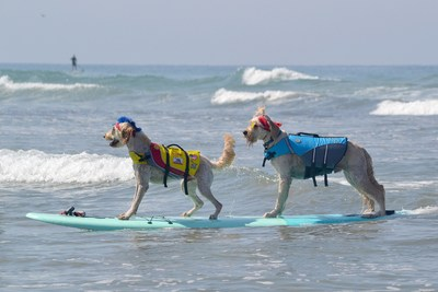 Free-Style Champions Derby and Teddy - Helen Woodward Animal Center's 13th Annual Surf Dog Surf-a-Thon, presented by Blue Buffalo, Sunday, September 9th, 2018.