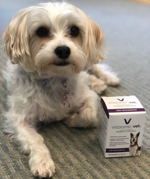 Visbiome Vet is a high potency veterinary probiotic for dogs which is used to support normal inflammatory response in the GI tract and to help maintain gut health. Each dose contains 112.5 billion live bacteria and is shipped and stored cold to ensure maximum potency.