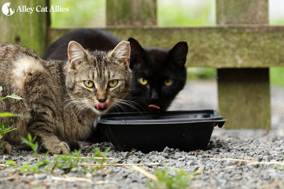 Alley Cat Allies offers tips for cat caregivers and pet owners in the path of Hurricane Florence