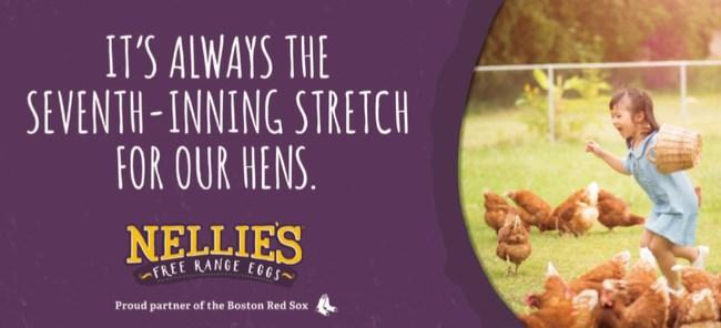 Nellie's Free Range Named Official Egg of Boston Red Sox