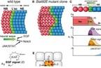 Kanazawa University Research: Mechanism of Biological Noise Cancellation Revealed