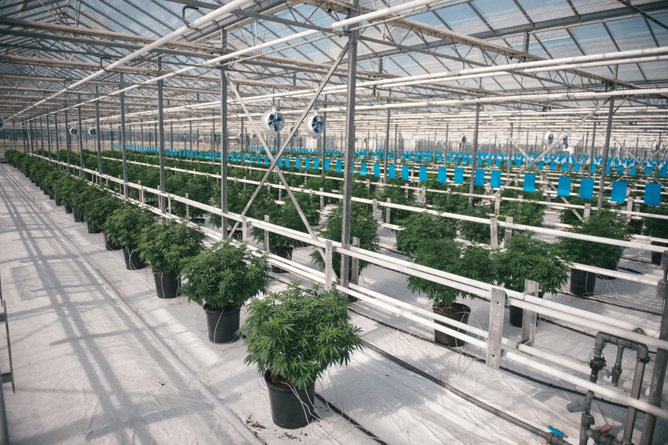 Canopy Growth Production Footprint Increases with Further Tweed Farms Licence Expansion (CNW Group/Canopy Growth Corporation)