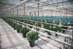 La capacité de production de Canopy Growth augmente grâce à l'octroi de nouvelles licences concernant l'expansion de Tweed Farms (Groupe CNW/Canopy Growth Corporation)
