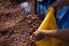 Mars_Cocoa_Harvest_Cote_d_Ivoire