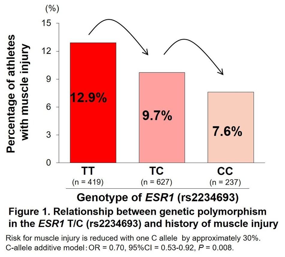 Relationship between a genetic polymorphism in the ESR1 T/C (rs2234693) and history of muscle injury (PRNewsfoto/Juntendo University)