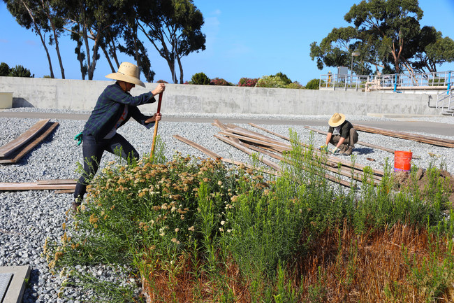 Save The Bay Native Plant Nursery Moved to New Location at Oro Loma Sanitary District