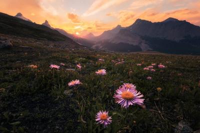 « Alors que nous faisions une randonnée en famille dans le sentier Parker Ridge dans le Parc national de Banff, nous sommes arrivés devant cet extraordinaire paysage de fleurs sauvages en floraison et de montagnes infinies. Nous avons décidé d'y rester jusque tard le soir afin d'observer le coucher de soleil. En raison des feux de forêt en Colombie-Britannique, le ciel était vraiment enfumé et est devenu d'un incroyable rouge doré. » Annie Fu, Calgary, Alberta (Groupe CNW/Société géographique royale du Canada)