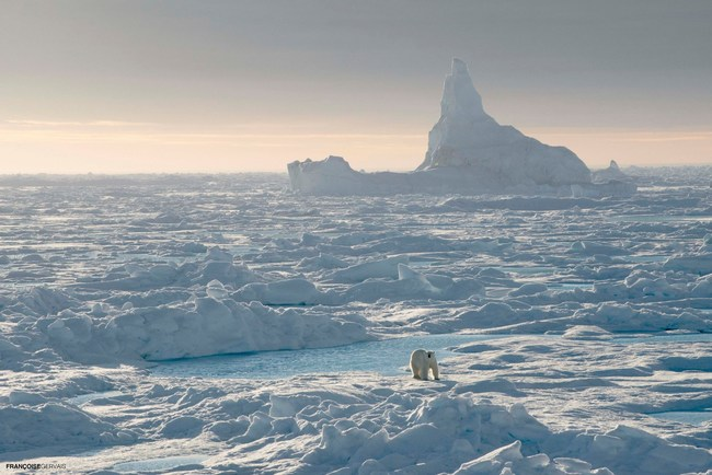 Polar bear roaming the vast High Arctic sea ice amongst spectacular icebergs; Photo Credit: Françoise Gervais (CNW Group/Royal Canadian Geographical Society)
