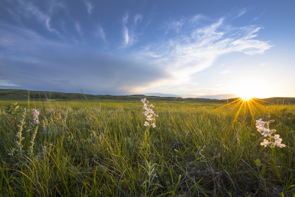 Endangered Grasslands by Jason Bantle (CNW Group/The Nature Conservancy of Canada)