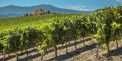 Un vignoble de Bordeaux. (Groupe CNW/Air Canada)