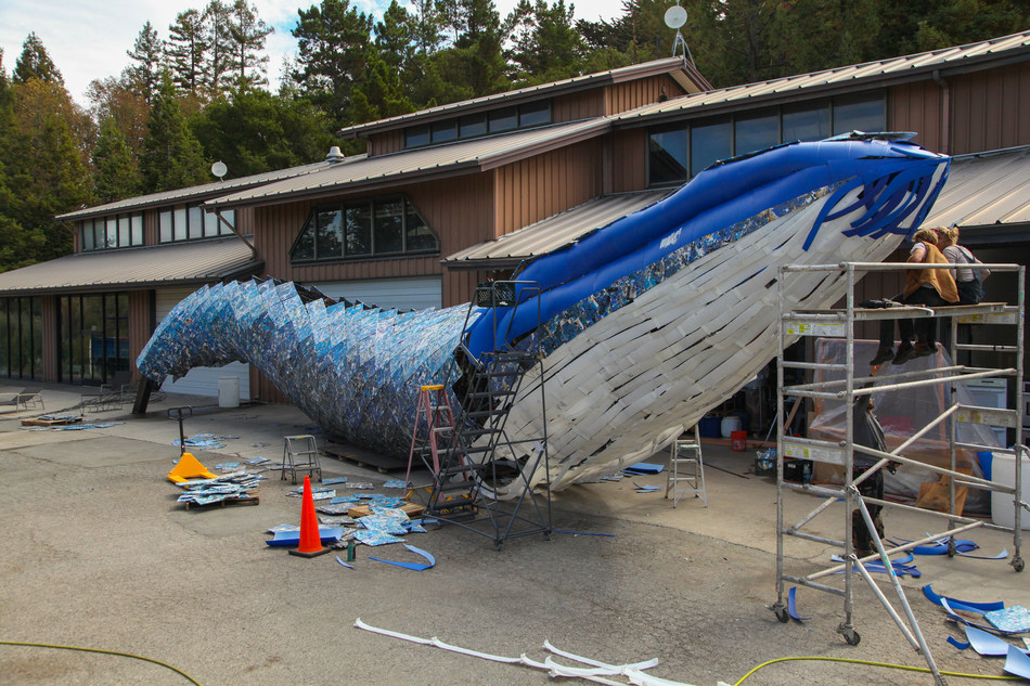 Artists Joel Dean Stockdill and Yustina Salnikova sit atop scaffolding while making design decisions at the construction site of Monterey Bay Aquarium's life-sized blue whale art installation made from discarded single-use plastic. Building the whale took four-and-a-half months, including 15 weeks to hand-recycle the plastic panels, four weeks to fabricate the steel frame and three weeks to sculpt and screw on the panels.