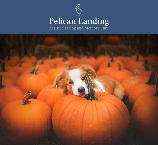 Pelican Landing Assisted Living and Memory Care hosts Paws and Pumpkins animal adoption event in partnership with H.A.L.O. Rescue this Sunday, October 14th from 1-4pm in Sebastian, Fla.