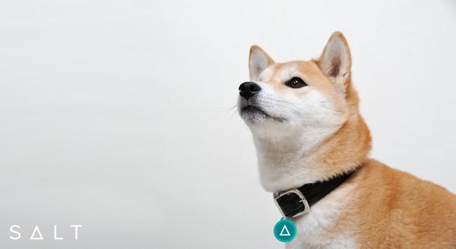 dogecoin lending platform