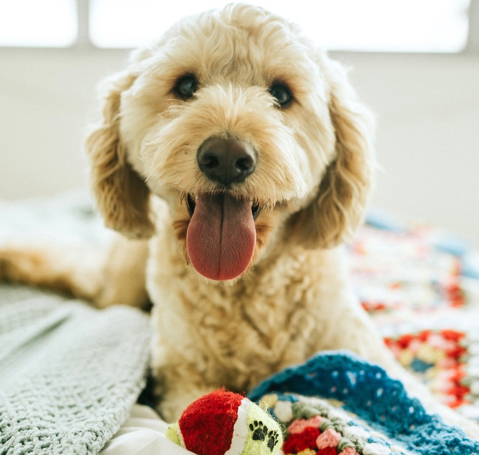 Pet tech leader CUDDLY launches new pet product gift registry for pet parents, benefiting local animal rescues