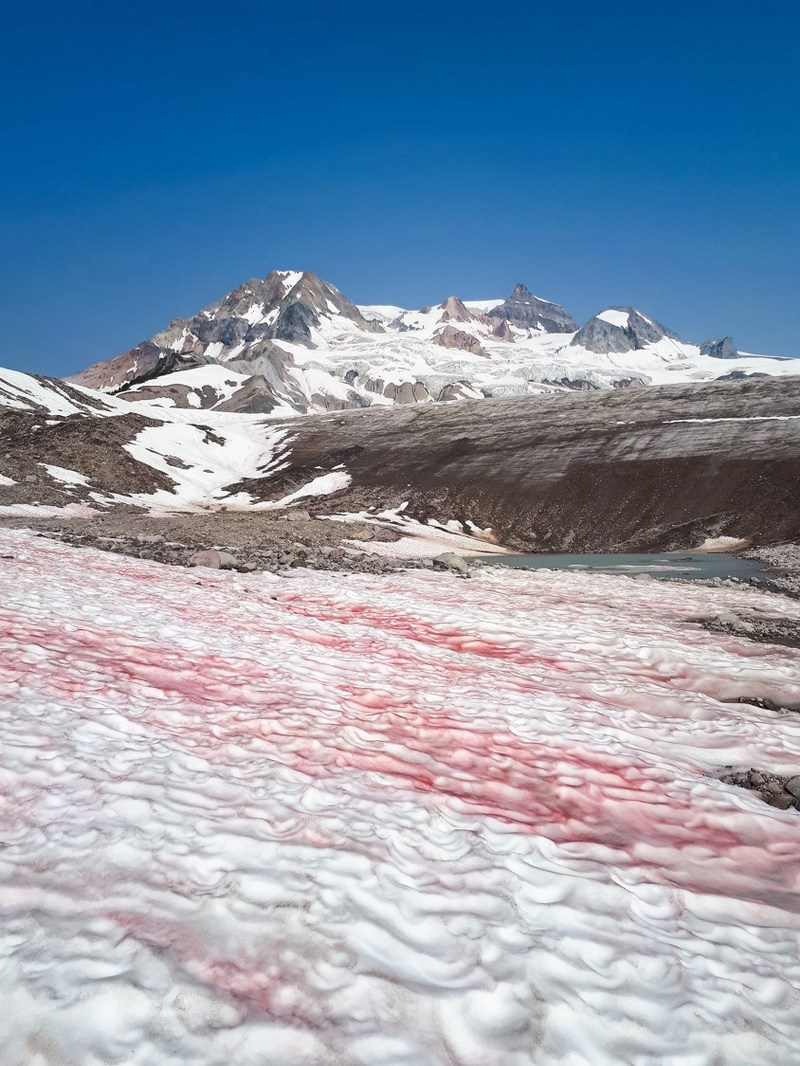 Watermelon Snow (CNW Group/Genome British Columbia)