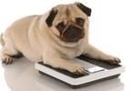 Les récompenses servent souvent de mécanisme de formation de liens pour de nombreux propriétaires d'animaux et leurs animaux de compagnie. (Groupe CNW/Institut canadien de la santé animale)