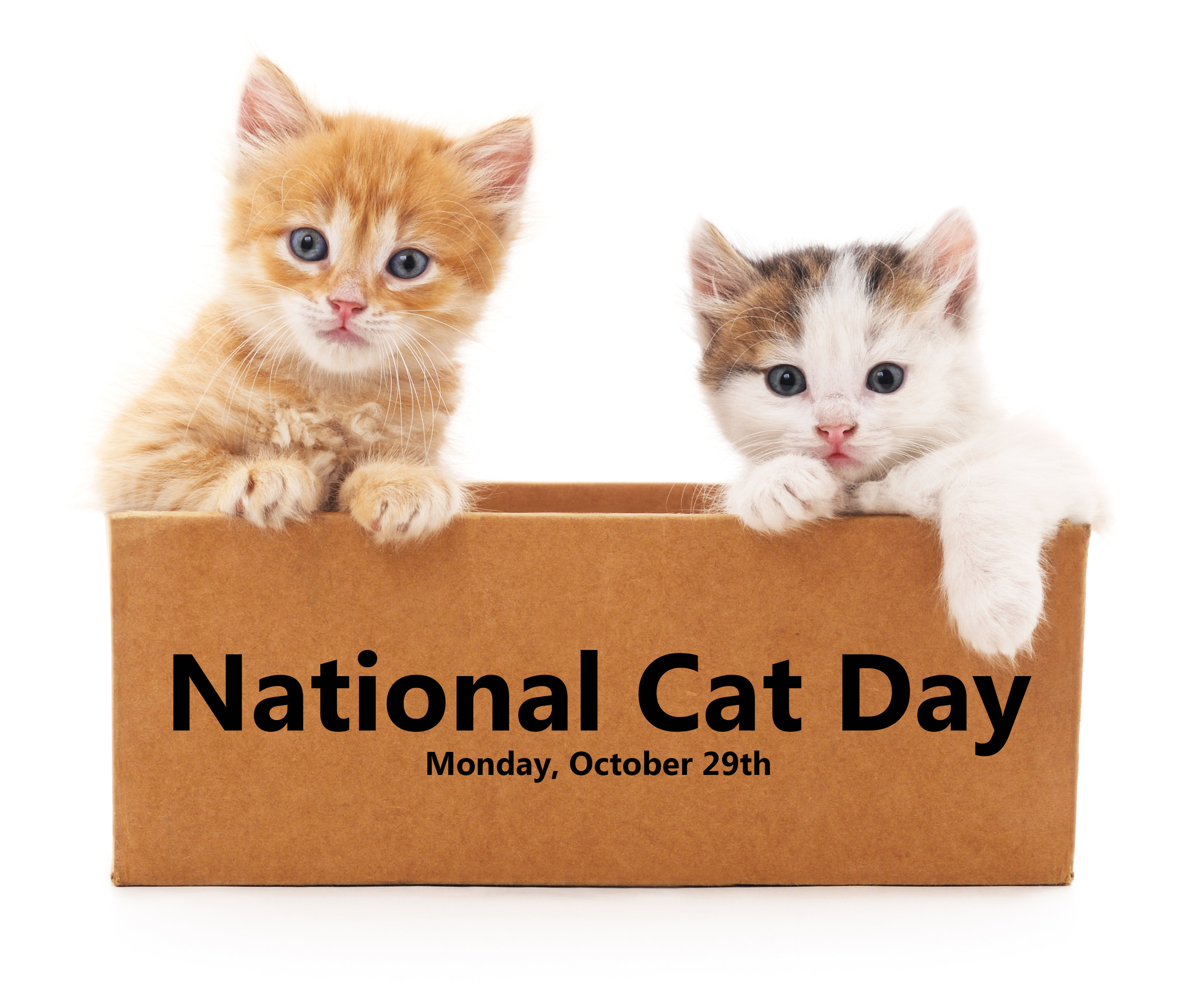 Join Litter Genie Support Shelter Cats Across America This National Cat Day