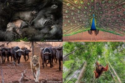 Epson is a global sponsor of the 2018 Nature's Best Photography Windland Smith Rice International Awards Exhibition, which will be displayed on the second floor of the Smithsonian National Museum of Natural History located on the National Mall in Washington, D.C.