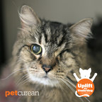 "Petcurean encourages the adoption of rescue cats with its ""Uplift the Underdog: Cat Edition"" Campaign. (CNW Group/Petcurean)"