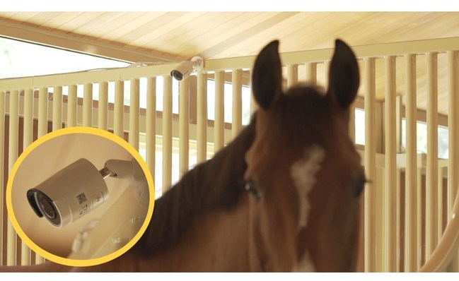 StableGuard camera in horse stall