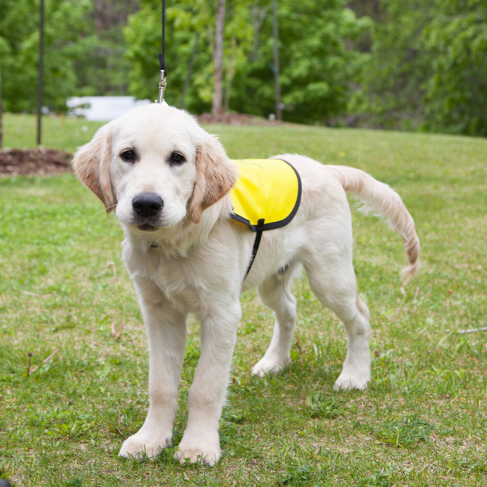 Come, sit, stay and celebrate CNIB Guide Dogs' first graduating class (CNW Group/CNIB)