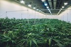 Grown Rogue Indoor Cultivation (CNW Group/Grown Rogue)