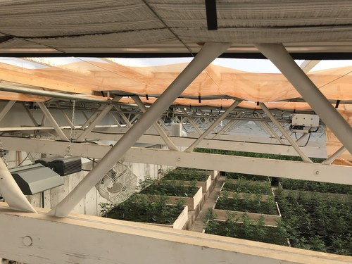 AJ's Farm in Pueblo County, Colo. uses UbiGro film in its commercial cannabis greenhouse built by GroGeo LLC.