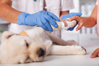 American Financial Benefits Center: For Many Vet Techs, Helping Animals Costs Financial Security