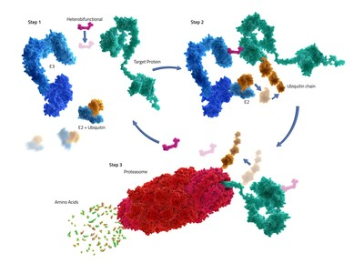 Kymera Therapeutics is advancing a new modality called targeted protein degradation, developing heterobifunctional molecules that harness the body's natural protein recycling machinery to degrade disease-causing proteins.