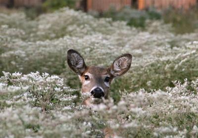 Deer at DTE's Monroe Power Plant.