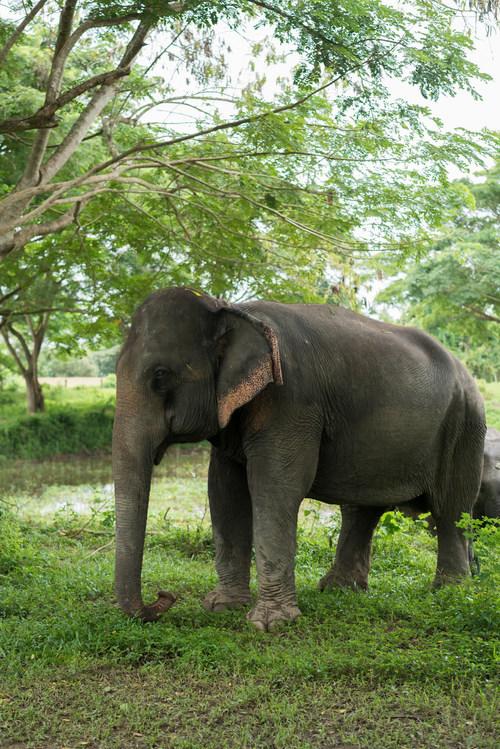 An elephant in a high-welfare venue in Thailand. (c) Thomas Cristofoletti/World Animal Protection