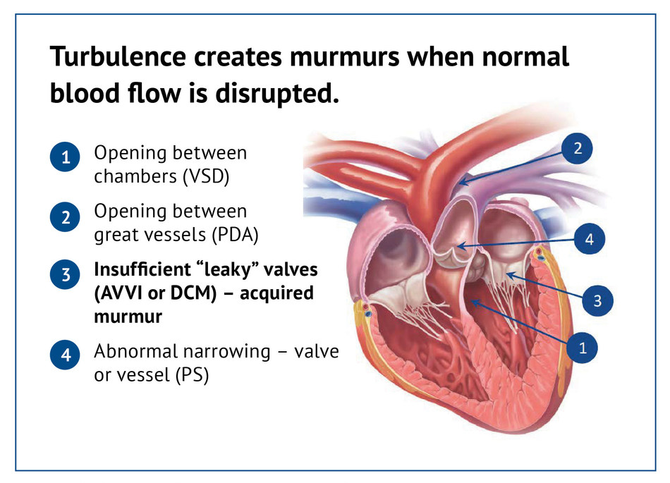 Figure 1: Causes of heart murmurs in dogs (CNW Group/Canadian Animal Health Institute)