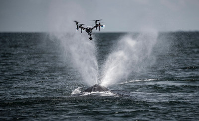 DJI Inspire 2 SnotBot capturing a whale's blow off Gabon West Africa