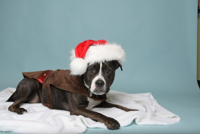 "Taylor Morrison Holds Second Annual ""Home for the Holidays"" Event at Sacramento SPCA"