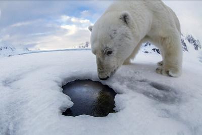 Polar bear selfie. Photo by Audun Rikardsen. All rights reserved (PRNewsfoto/Ontrack)