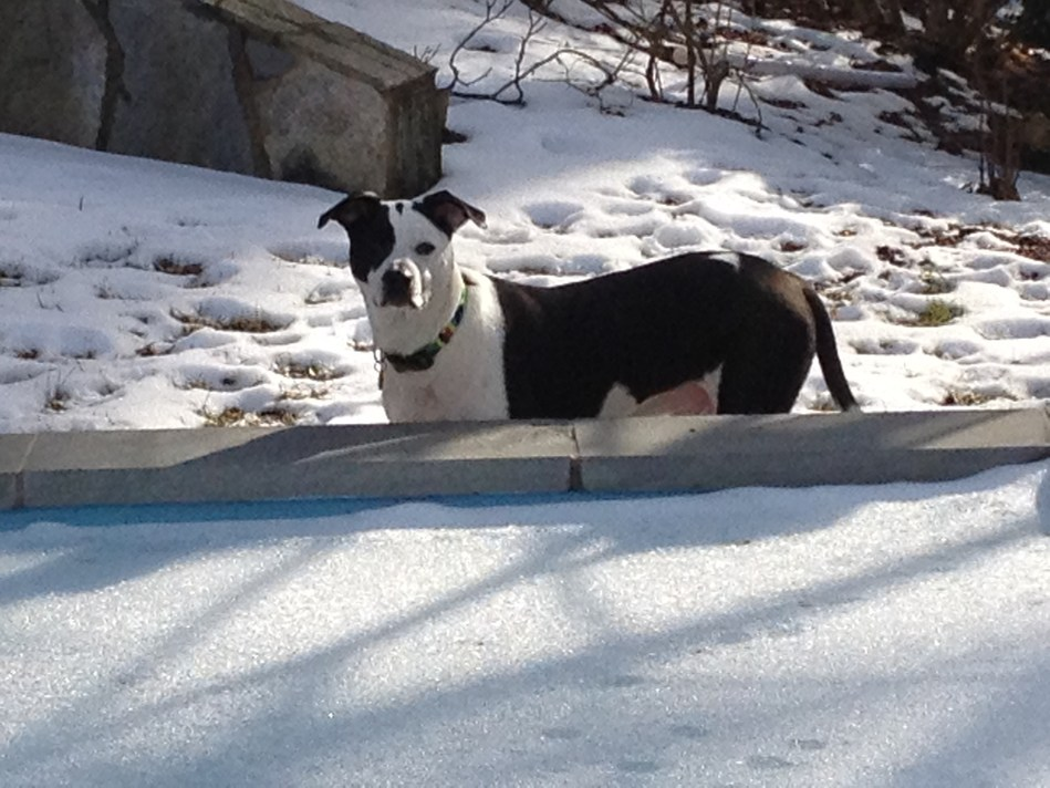 """""""Like most dogs, Lucky is an 'outsider' and he loves to romp in the snow, but one of our rules is that if it's too cold for us to be outside, it's too cold for him, too,"""" says Kiser. """"As guardians of our pets, it's important that we keep their safety in mind during all kinds of weather."""""""