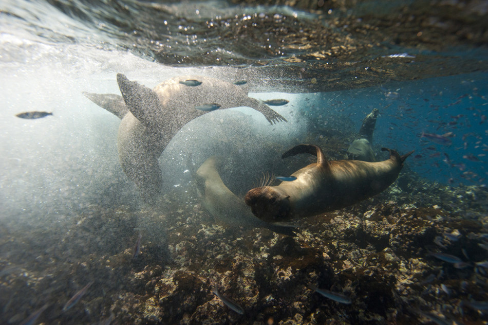 """The record-selling """"World of Adventures"""" journey will take off again in 2020, featuring a visit to the Galápagos Islands."""