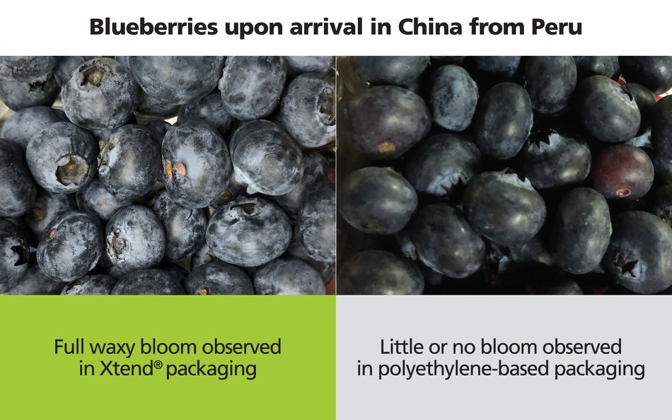 Xtend® packaging retains the waxy bloom of blueberries (PRNewsfoto/StePac Johnson Matthey)