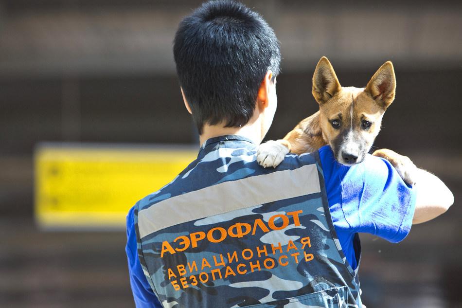 Aeroflot registers own breed of sniffer dogs (PRNewsfoto/Aeroflot)