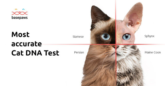 Find out what your cat's DNA can tell you about their ancestry and ultimately their health and habits